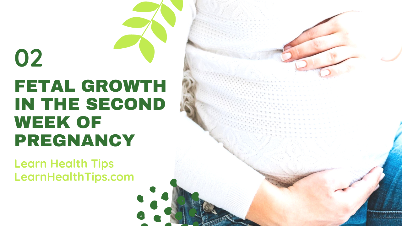 Fetal growth in the second week of Pregnancy