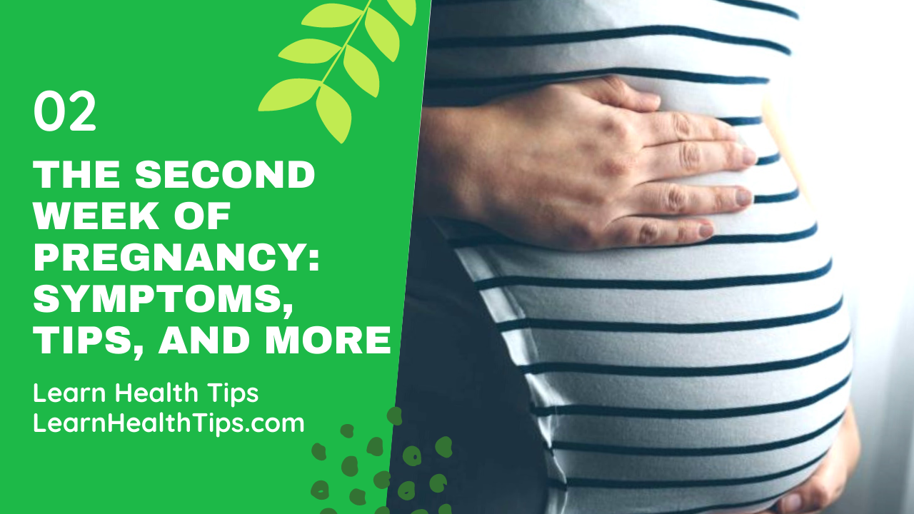 The second week of pregnancy Symptoms, Tips, and More